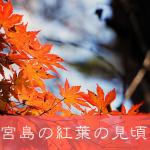 2017年宮島の紅葉の見頃はいつ?最適な時期をチェック!!
