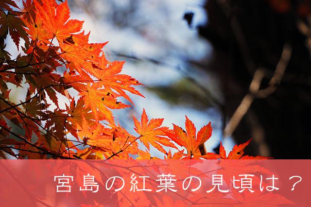 2019年宮島の紅葉の見頃はいつ?最適な時期をチェック!!