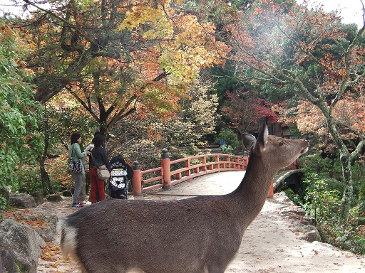 紅葉谷の鹿