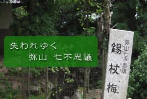 nanafushigi