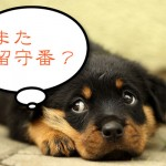 宮島のフェリーやロープウェイにペット(犬)は乗れるの?