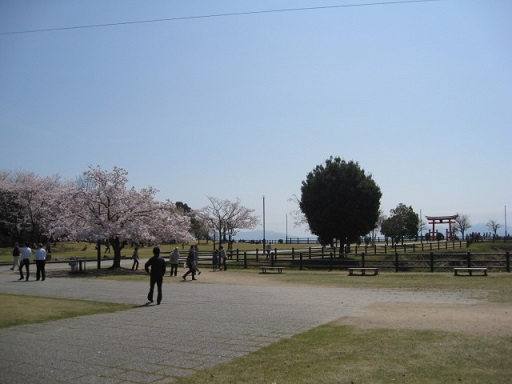 宮島サービスエリアの下りの桜と大鳥居