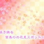桜が咲き乱れる宮島のお花見穴場スポット一覧!!2017年度版!!