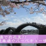 2017年は錦帯橋でお花見!!駐車場やバーベキュー情報も!!