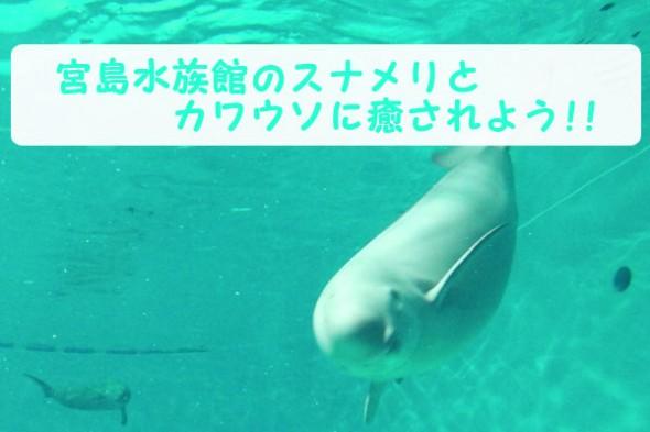 宮島水族館(みやじマリン)のスナメリとカワウソの癒し効果が絶大!!