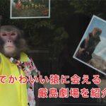 宮島で猿に会える場所!厳島劇場の猿まわしは大人だけでなく子供にもおすすめ!