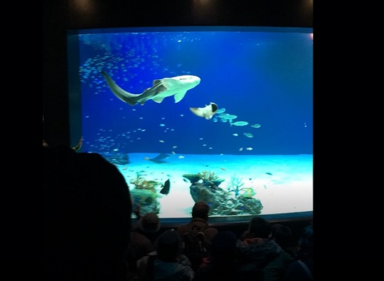 マリホ水族館のラグーン水槽