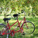 ペットと一緒に遊べる!サイクリングやお花見が楽しめる土師ダムを紹介!