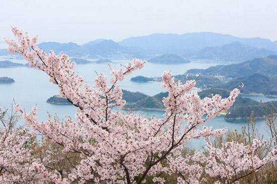 広島で桜を堪能できるおすすめお花見スポットBEST10!見頃の時期や駐車場も紹介!