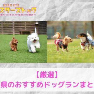 【厳選】広島県のおすすめドッグランまとめ!
